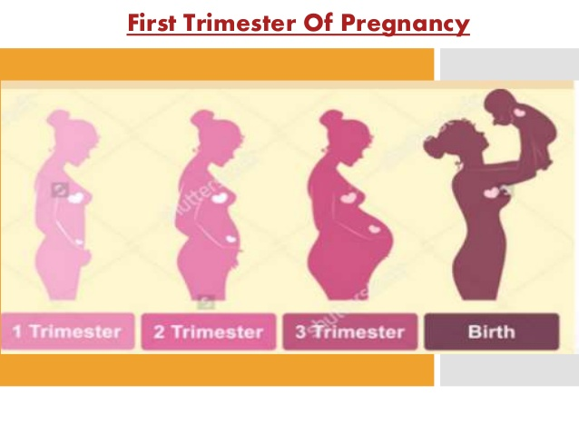 First Trimester Of Pregnancy 1