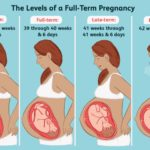How Many Weeks Is A Full Term Pregnancy?